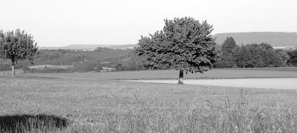 Baum_grau