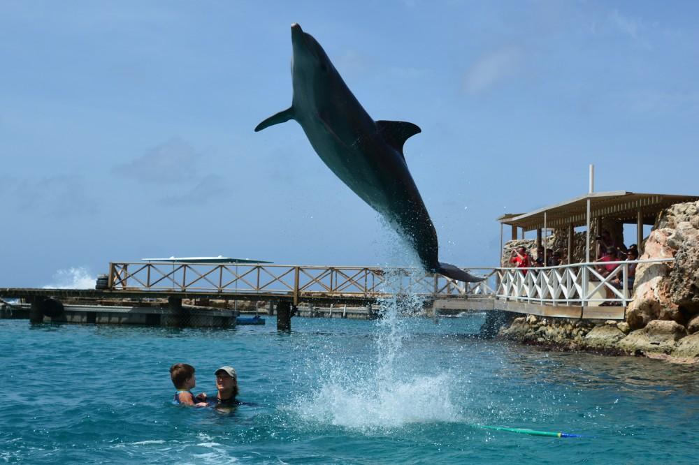 Delfin01